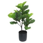 Target Fiddle Leaf Fig Tree