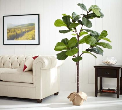 Pottery Barn Fiddle Leaf Fig Tree